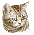 engraving cat head vector image vector image