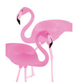 flamingo on white background vector image