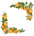 grapefruit branches in a frame decoration vector image
