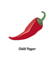 red chilli pepper vector image
