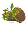 two chocolate pies with matcha cream and glazing vector image