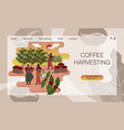 black women with baskets harvest coffee on vector image vector image