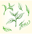 collection of tea leaves vector image vector image