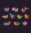 mexican birds with colorful ornaments and feathers vector image vector image