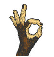 Monkey hand ok gesture color sketch engraving