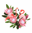 paradise pink flamingo birds with exotic protea vector image