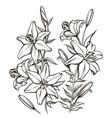 bouguet lilies vector image