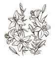 bouguet of lilies vector image