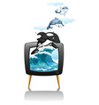 Dolphines swimming and jumping on TV vector image vector image