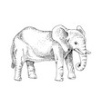 hand drawn black and white elephant vector image