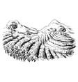 tea plantation landscape vector image vector image