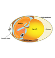 Bird egg embryo diagram vector image