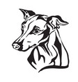 decorative portrait of dog italian greyhound vector image