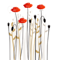 Floral background poppies vector image vector image