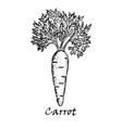 hand drawn of one carrot vector image vector image