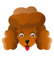 orange poodle on white background vector image