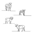 continuous line drawing set sheeps design vector image