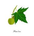 drawing branch plane tree vector image vector image