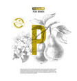 eco food concept design with hand drawn pear vector image