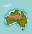 platypus in australia map in green surrounded by vector image