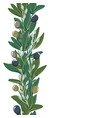 seamless border with olive leaves and olives vector image