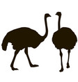 silhouette big ostrich standing on a white vector image