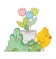 little chick farm with flowers in pot vector image