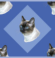 seamless pattern with thai cat vector image vector image
