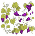 winemaking grape bunches isolated icon vineyard vector image vector image