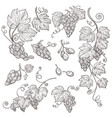 grape bunches isolated sketches vineyard harvest vector image