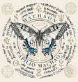papilio machaon butterfly with old magic symbols vector image vector image