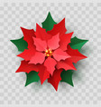red christmas poinsettia flower vector image
