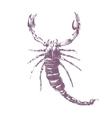 scorpion on white background vector image