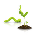 green tea worm and small tree with soil vector image vector image