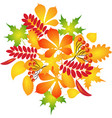 composition of autumn leaves vector image