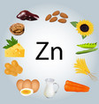 food rich in zinc healthy eating vector image vector image