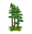 forest trees cartoon vector image