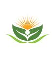 sun logo icon template vector image