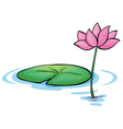 A waterlily flower vector image