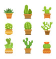 Botany decorative plants in pots cactus with vector image