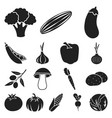 different kinds of vegetables black icons in set vector image vector image
