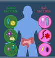 medical infographic intestinal flora gut health vector image