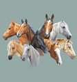 set of horses breeds vector image vector image