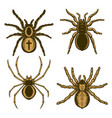 set spider in engraving style halloween theme vector image vector image