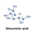 Glucuronic acid is a uronic acid vector image vector image
