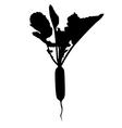long radish vector image vector image