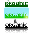Organic ornate logotype text vector image vector image