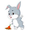 cute rabbit harvest carrot vector image vector image