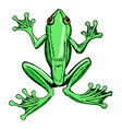 sketch of tree frog vector image
