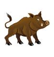 cute wild boar vector image vector image